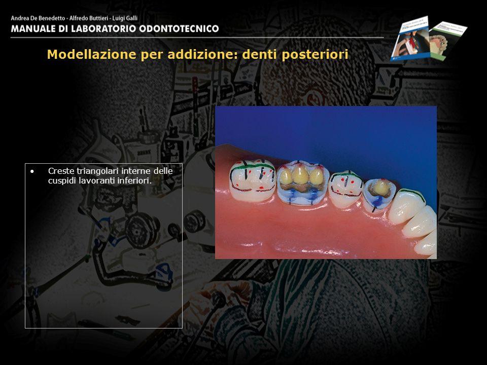 Creste triangolari interne delle cuspidi lavoranti inferiori. Modellazione per addizione: denti posteriori 19