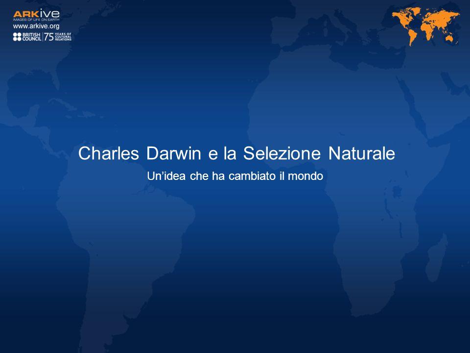 Charles Darwin e la Selezione Naturale Unidea che ha cambiato il mondo