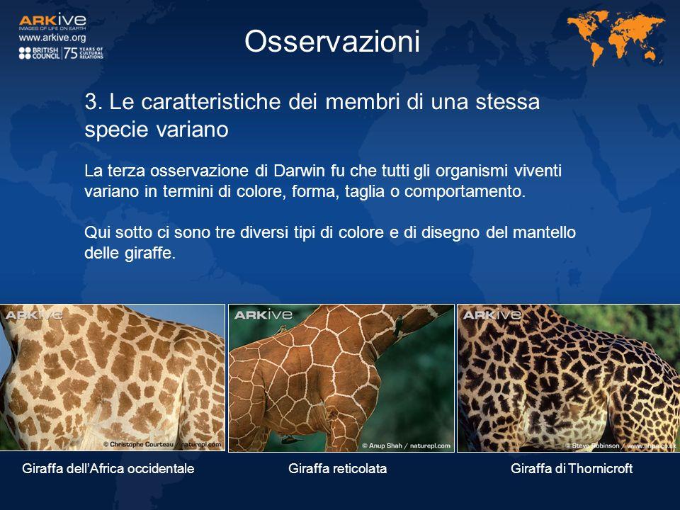 3. Le caratteristiche dei membri di una stessa specie variano La terza osservazione di Darwin fu che tutti gli organismi viventi variano in termini di