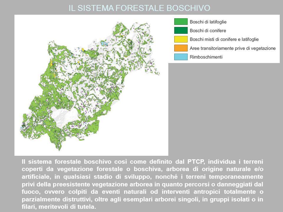 IL SISTEMA FORESTALE BOSCHIVO Il sistema forestale boschivo così come definito dal PTCP, individua i terreni coperti da vegetazione forestale o boschiva, arborea di origine naturale e/o artificiale, in qualsiasi stadio di sviluppo, nonché i terreni temporaneamente privi della preesistente vegetazione arborea in quanto percorsi o danneggiati dal fuoco, ovvero colpiti da eventi naturali od interventi antropici totalmente o parzialmente distruttivi, oltre agli esemplari arborei singoli, in gruppi isolati o in filari, meritevoli di tutela.