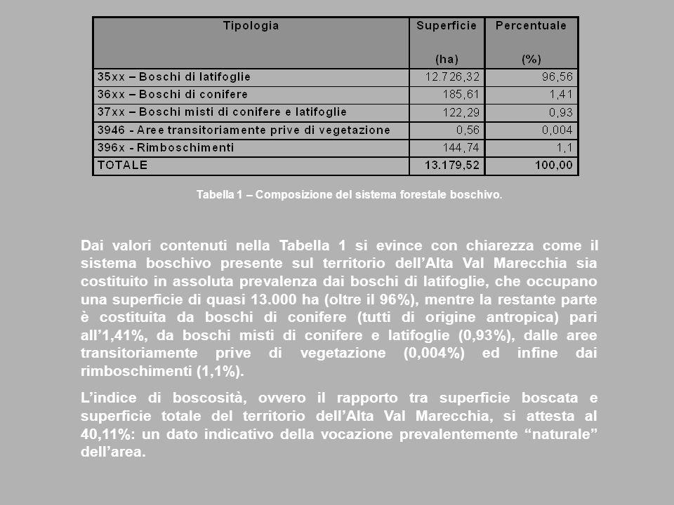 Dai valori contenuti nella Tabella 1 si evince con chiarezza come il sistema boschivo presente sul territorio dellAlta Val Marecchia sia costituito in assoluta prevalenza dai boschi di latifoglie, che occupano una superficie di quasi 13.000 ha (oltre il 96%), mentre la restante parte è costituita da boschi di conifere (tutti di origine antropica) pari all1,41%, da boschi misti di conifere e latifoglie (0,93%), dalle aree transitoriamente prive di vegetazione (0,004%) ed infine dai rimboschimenti (1,1%).