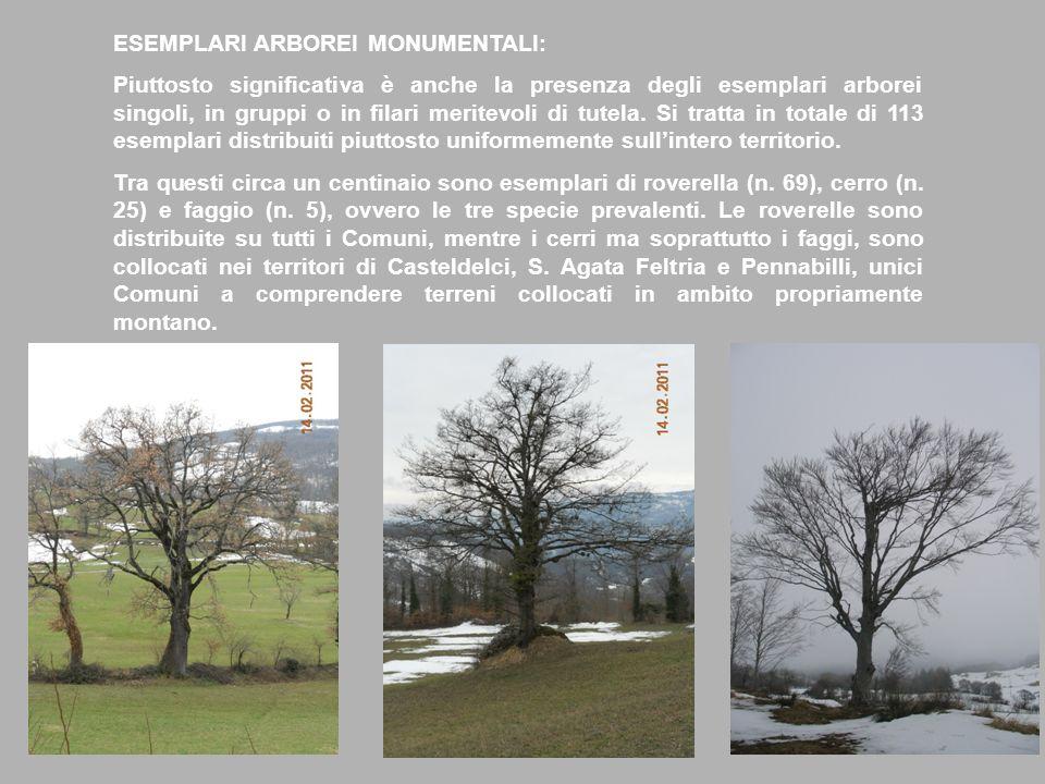 ESEMPLARI ARBOREI MONUMENTALI: Piuttosto significativa è anche la presenza degli esemplari arborei singoli, in gruppi o in filari meritevoli di tutela.