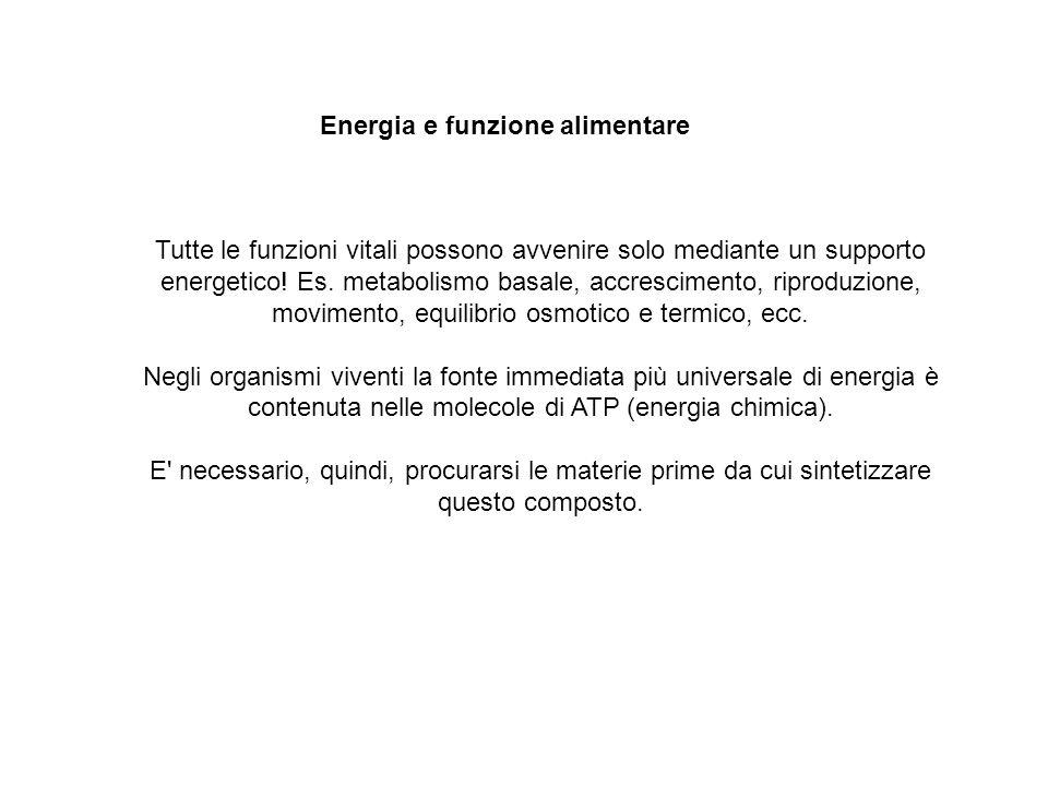 Tutte le funzioni vitali possono avvenire solo mediante un supporto energetico.