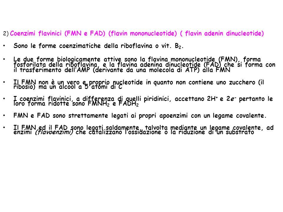 2) Coenzimi flavinici (FMN e FAD) (flavin mononucleotide) ( flavin adenin dinucleotide) Sono le forme coenzimatiche della riboflavina o vit.