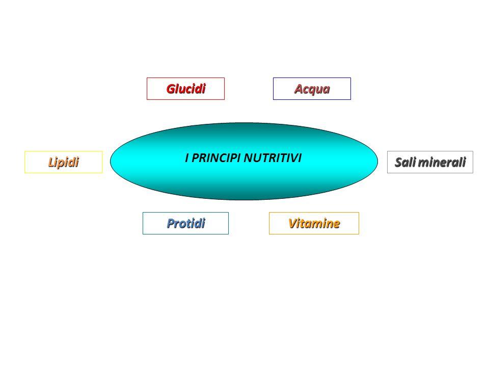 I coenzimi da soli sono cataliticamente inattivi ma, unendosi allapoenzima, formano lenzima cataliticamente attivo.