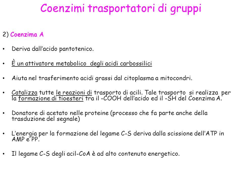 Coenzimi trasportatori di gruppi 2) Coenzima A Deriva dallacido pantotenico.