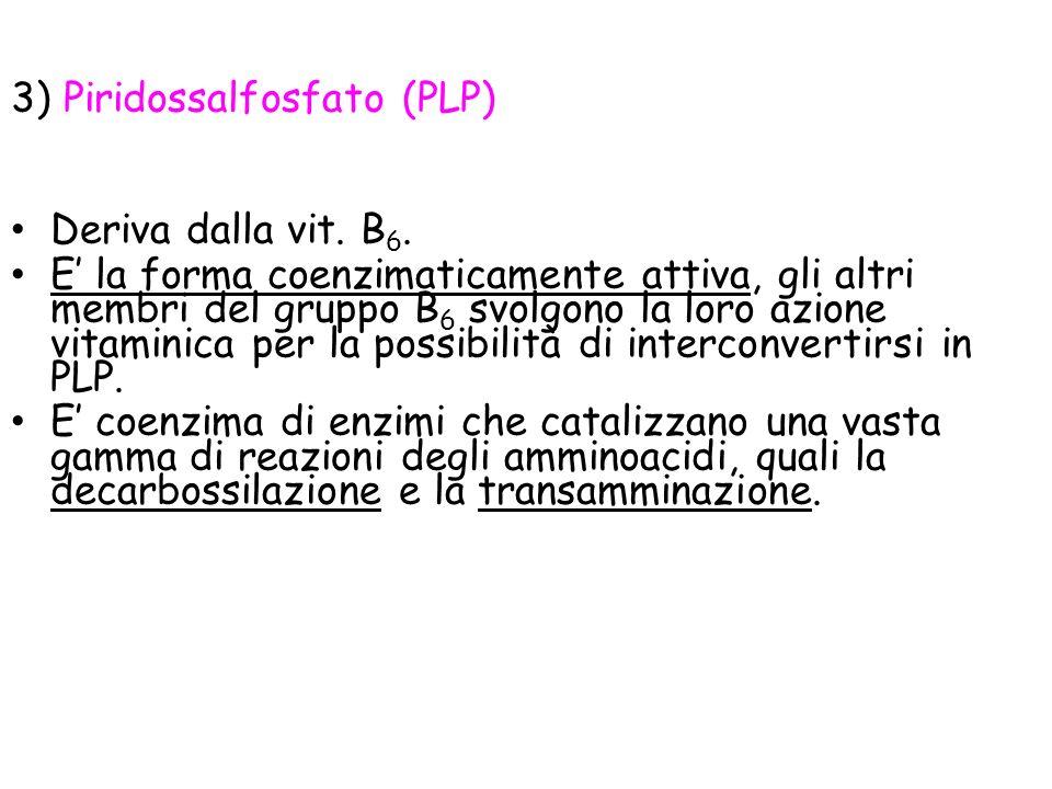 3) Piridossalfosfato (PLP) Deriva dalla vit.B 6.