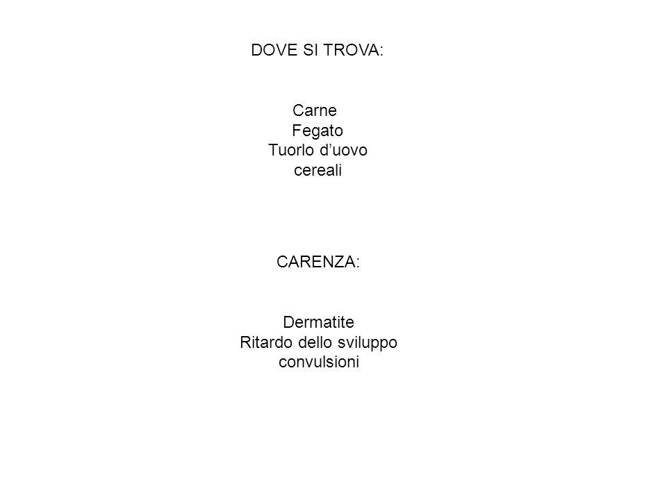 DOVE SI TROVA: Carne Fegato Tuorlo duovo cereali CARENZA: Dermatite Ritardo dello sviluppo convulsioni