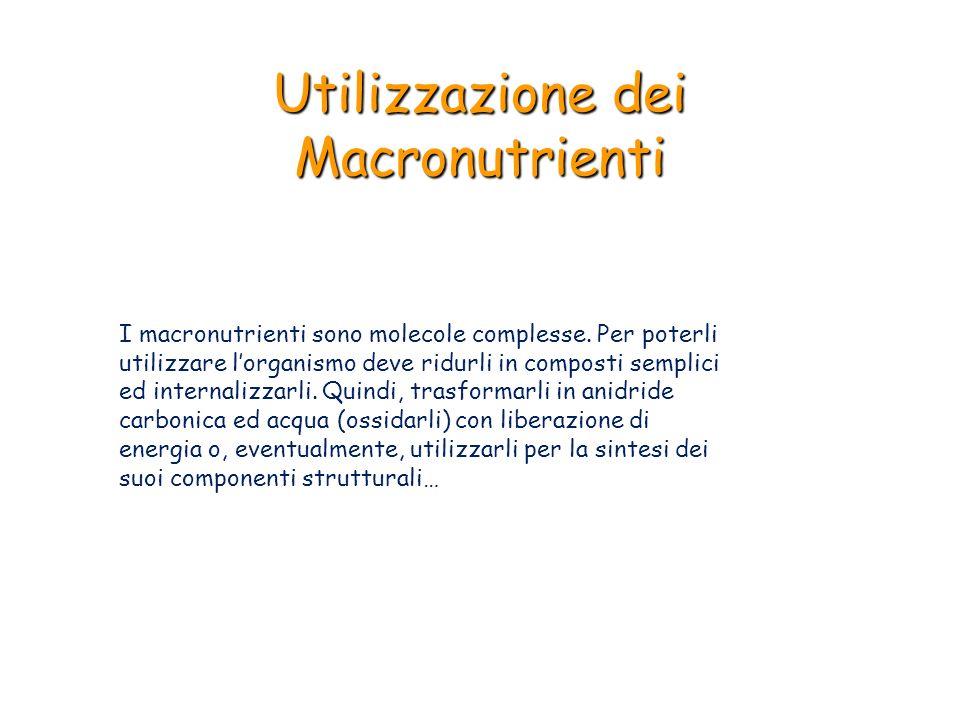 Utilizzazione dei macronutrienti i macronutrienti sono molecole
