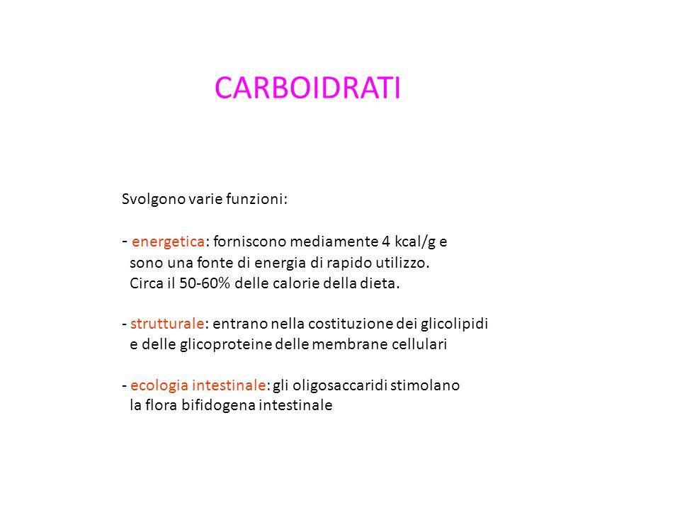 CARBOIDRATI Svolgono varie funzioni: - energetica: forniscono mediamente 4 kcal/g e sono una fonte di energia di rapido utilizzo.