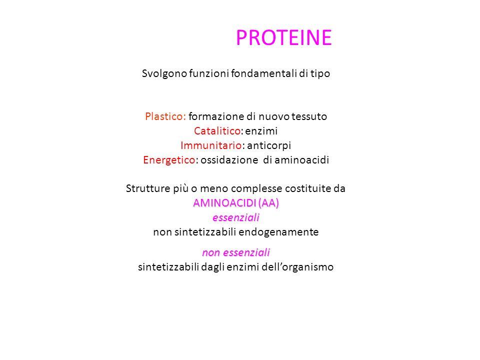 PROTEINE Svolgono funzioni fondamentali di tipo Plastico: formazione di nuovo tessuto Catalitico: enzimi Immunitario: anticorpi Energetico: ossidazione di aminoacidi Strutture più o meno complesse costituite da AMINOACIDI (AA) essenziali non sintetizzabili endogenamente non essenziali sintetizzabili dagli enzimi dellorganismo