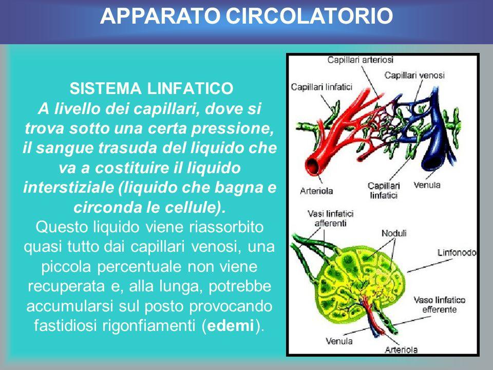 SISTEMA LINFATICO A livello dei capillari, dove si trova sotto una certa pressione, il sangue trasuda del liquido che va a costituire il liquido inter