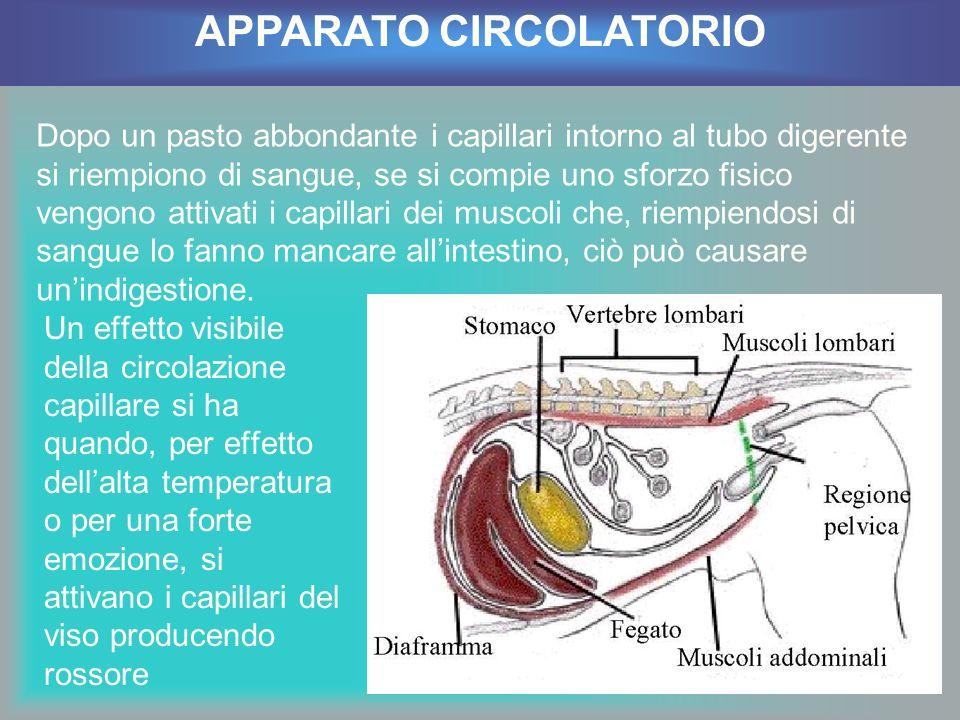 Un effetto visibile della circolazione capillare si ha quando, per effetto dellalta temperatura o per una forte emozione, si attivano i capillari del