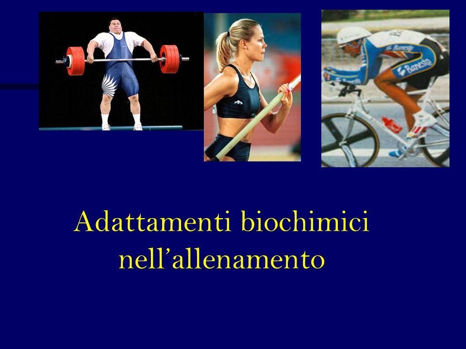 Adattamenti biochimici nellallenamento