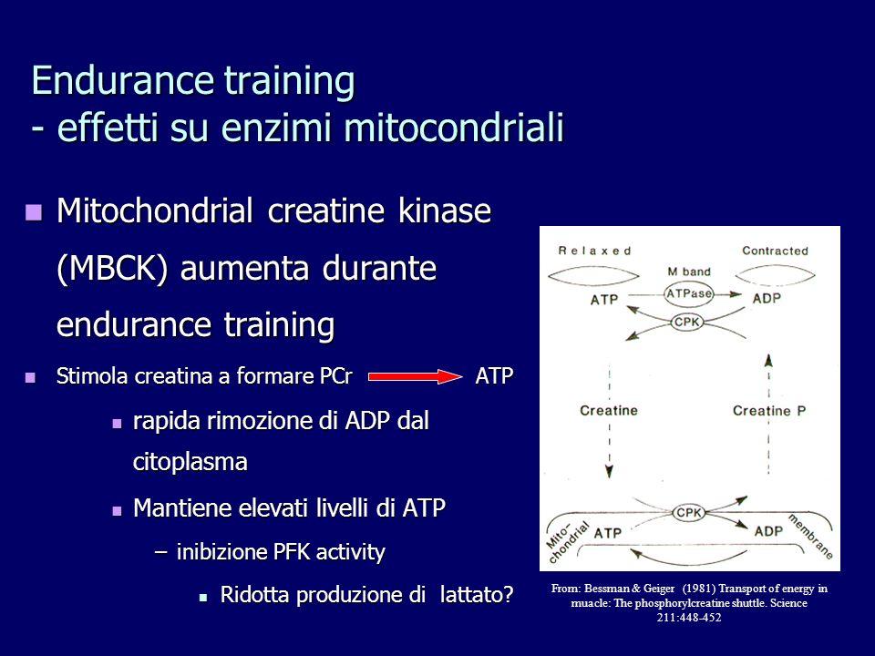 Mitochondrial creatine kinase (MBCK) aumenta durante endurance training Mitochondrial creatine kinase (MBCK) aumenta durante endurance training Stimol