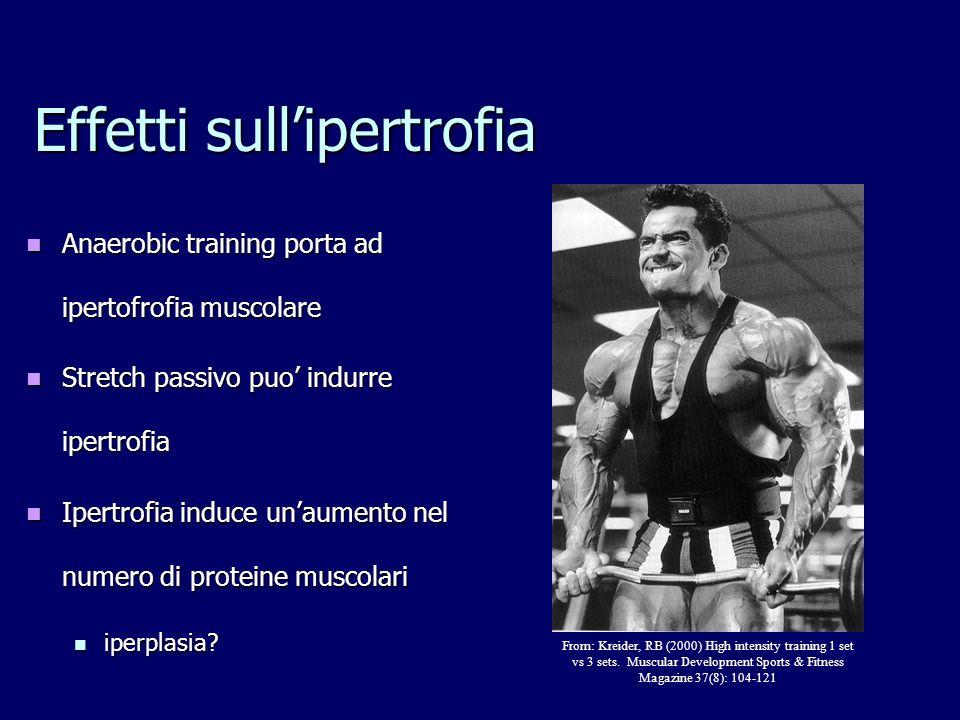 Effetti sullipertrofia Anaerobic training porta ad ipertofrofia muscolare Anaerobic training porta ad ipertofrofia muscolare Stretch passivo puo indur
