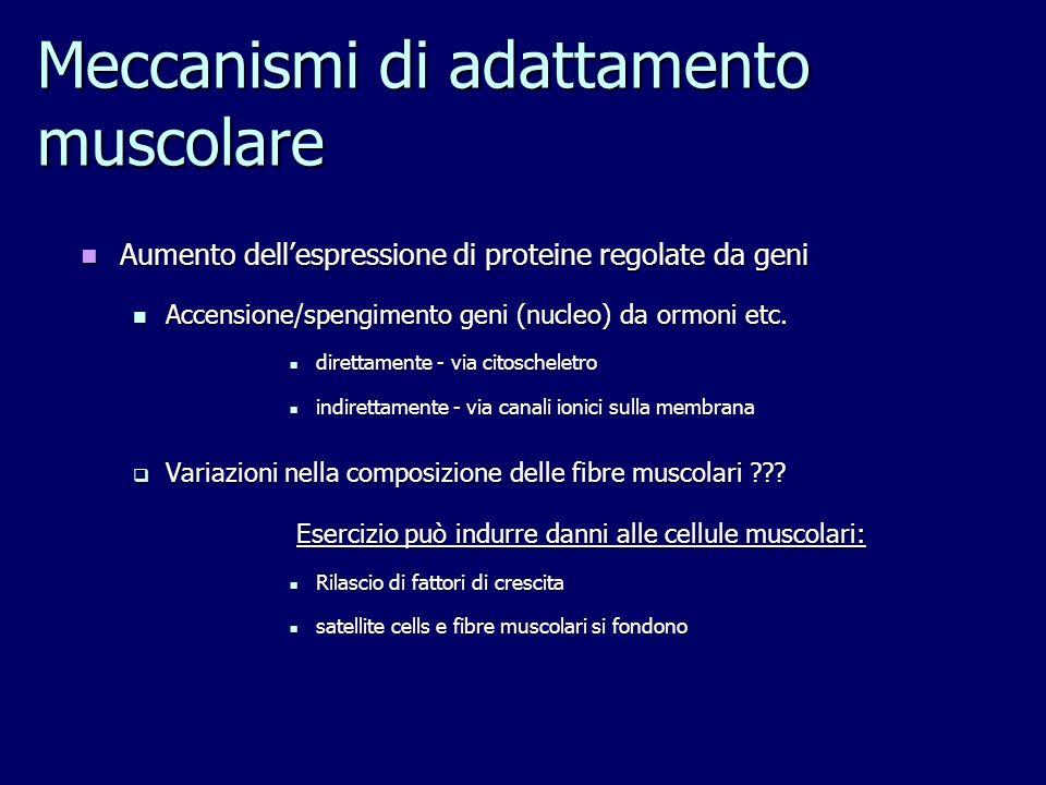 Meccanismi di adattamento muscolare Aumento dellespressione di proteine regolate da geni Aumento dellespressione di proteine regolate da geni Accensio