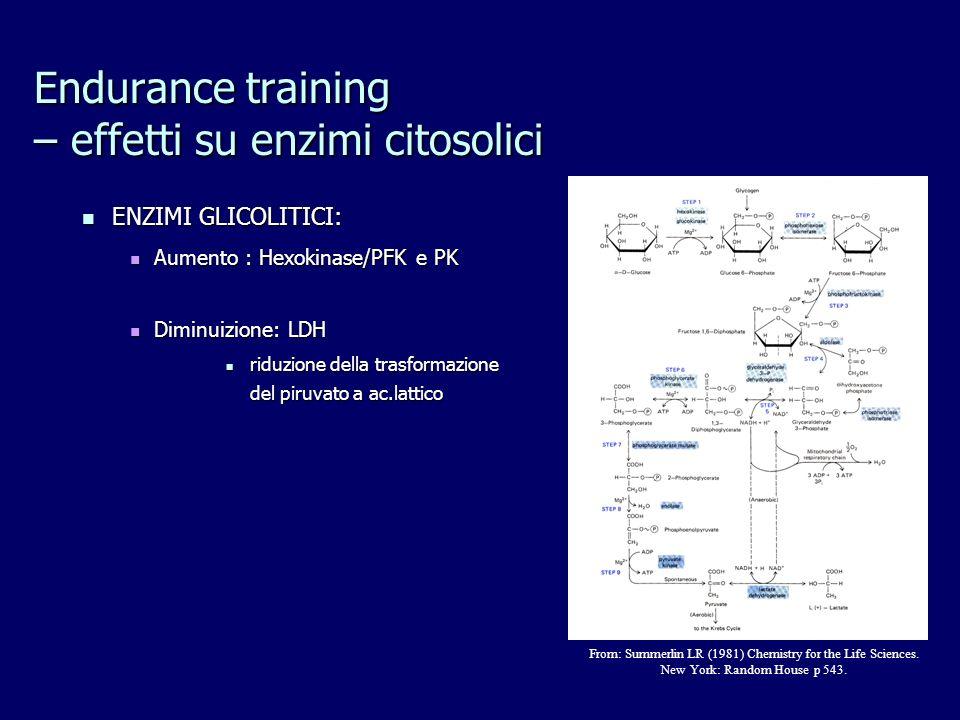Endurance training – effetti su enzimi citosolici ENZIMI GLICOLITICI: ENZIMI GLICOLITICI: Aumento : Hexokinase/PFK e PK Aumento : Hexokinase/PFK e PK