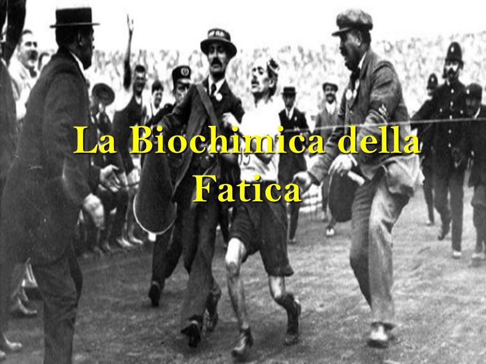 La Biochimica della Fatica