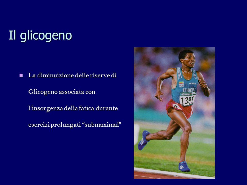 Il glicogeno La diminuizione delle riserve di Glicogeno associata con linsorgenza della fatica durante esercizi prolungati submaximal La diminuizione delle riserve di Glicogeno associata con linsorgenza della fatica durante esercizi prolungati submaximal