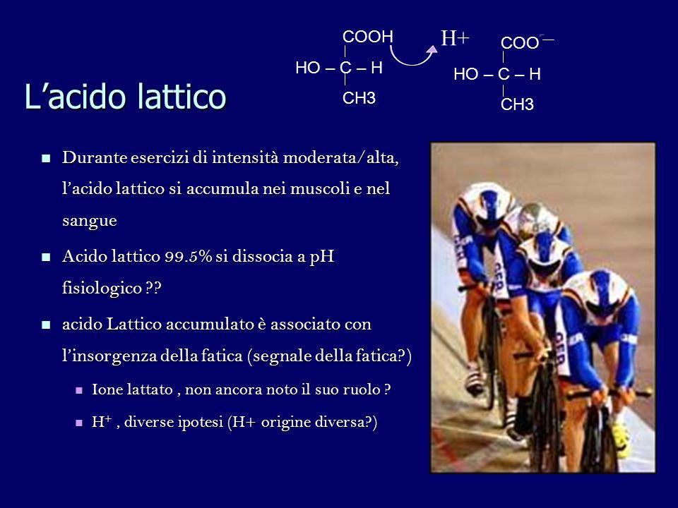 Lacido lattico Durante esercizi di intensità moderata/alta, lacido lattico si accumula nei muscoli e nel sangue Durante esercizi di intensità moderata