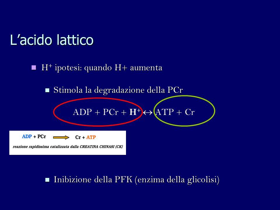 Lacido lattico H + ipotesi: quando H+ aumenta H + ipotesi: quando H+ aumenta Stimola la degradazione della PCr Stimola la degradazione della PCr ADP + PCr + H + ATP + Cr Inibizione della PFK (enzima della glicolisi) Inibizione della PFK (enzima della glicolisi)