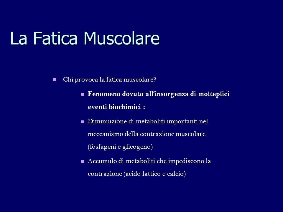 Chi provoca la fatica muscolare? Chi provoca la fatica muscolare? Fenomeno dovuto allinsorgenza di molteplici eventi biochimici : Fenomeno dovuto alli