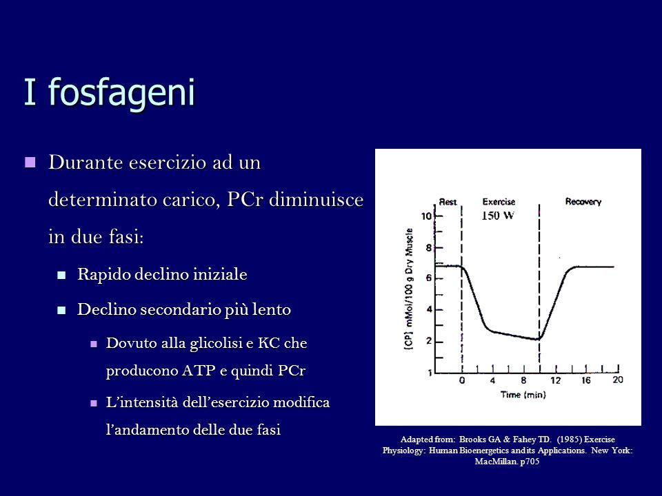I fosfageni Durante esercizio ad un determinato carico, PCr diminuisce in due fasi: Durante esercizio ad un determinato carico, PCr diminuisce in due