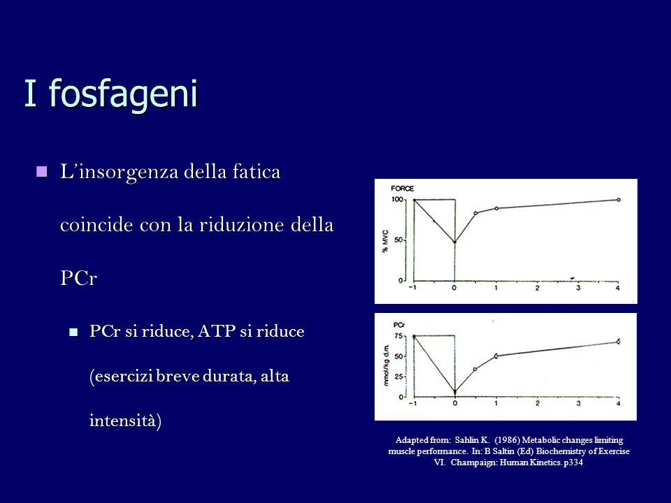 I fosfageni Linsorgenza della fatica coincide con la riduzione della PCr Linsorgenza della fatica coincide con la riduzione della PCr PCr si riduce, ATP si riduce (esercizi breve durata, alta intensità) PCr si riduce, ATP si riduce (esercizi breve durata, alta intensità) Adapted from: Sahlin K.