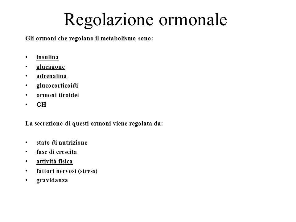 Regolazione ormonale Gli ormoni che regolano il metabolismo sono: insulina glucagone adrenalina glucocorticoidi ormoni tiroidei GH La secrezione di qu