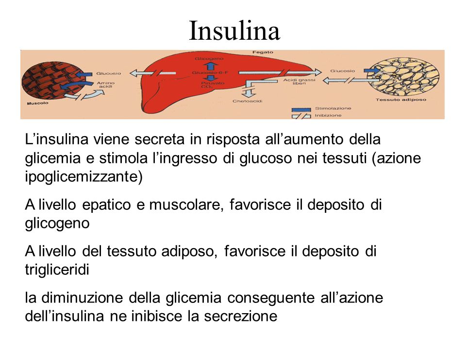 Insulina Linsulina viene secreta in risposta allaumento della glicemia e stimola lingresso di glucoso nei tessuti (azione ipoglicemizzante) A livello