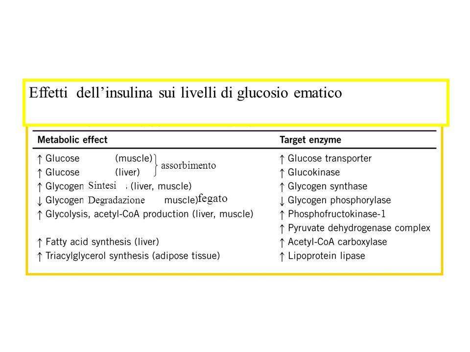 Effetti dellinsulina sui livelli di glucosio ematico assorbimento Sintesi Degradazione fegato