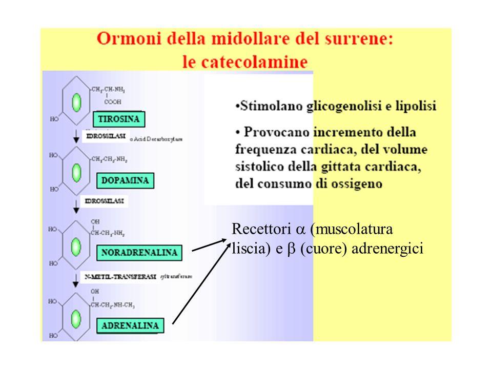 Recettori (muscolatura liscia) e (cuore) adrenergici