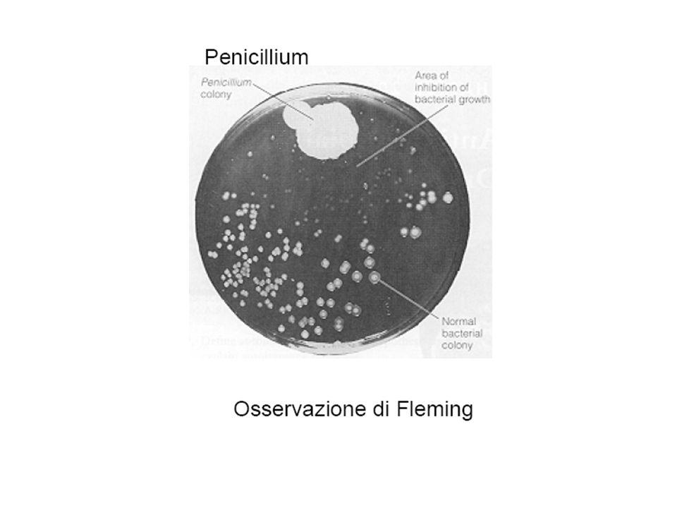 Microrganismi produttori Funghi Batteri