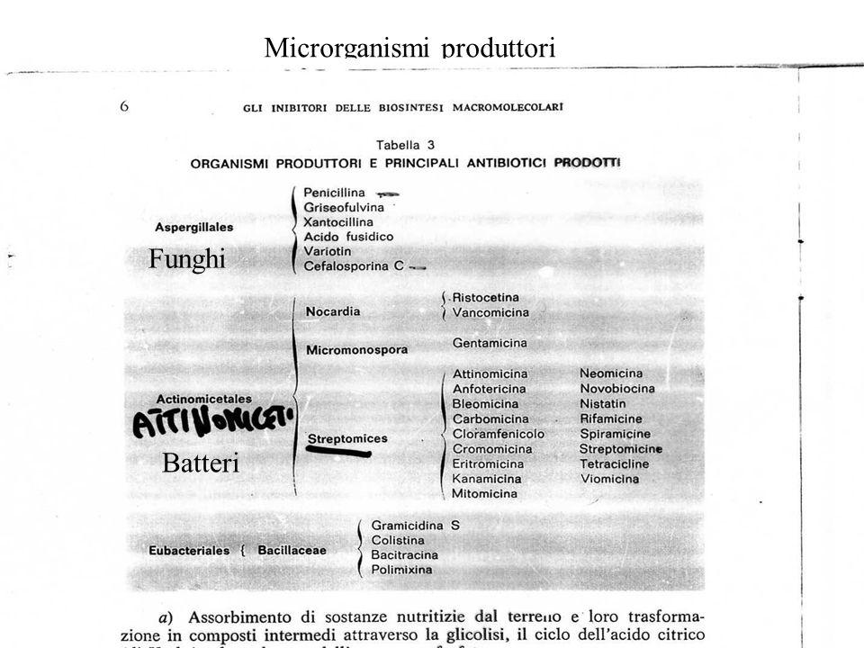 Inibitori sintesi proteica Tetracicline Aminoglicosidici Macrolidi Subunità ribosomale 30S Subunità ribosomale50S Sito A Attacco fMET-tRNA Processo di traslocazione