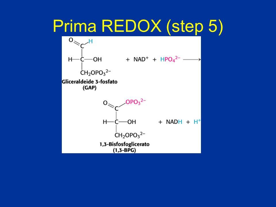 Prima REDOX (step 5)