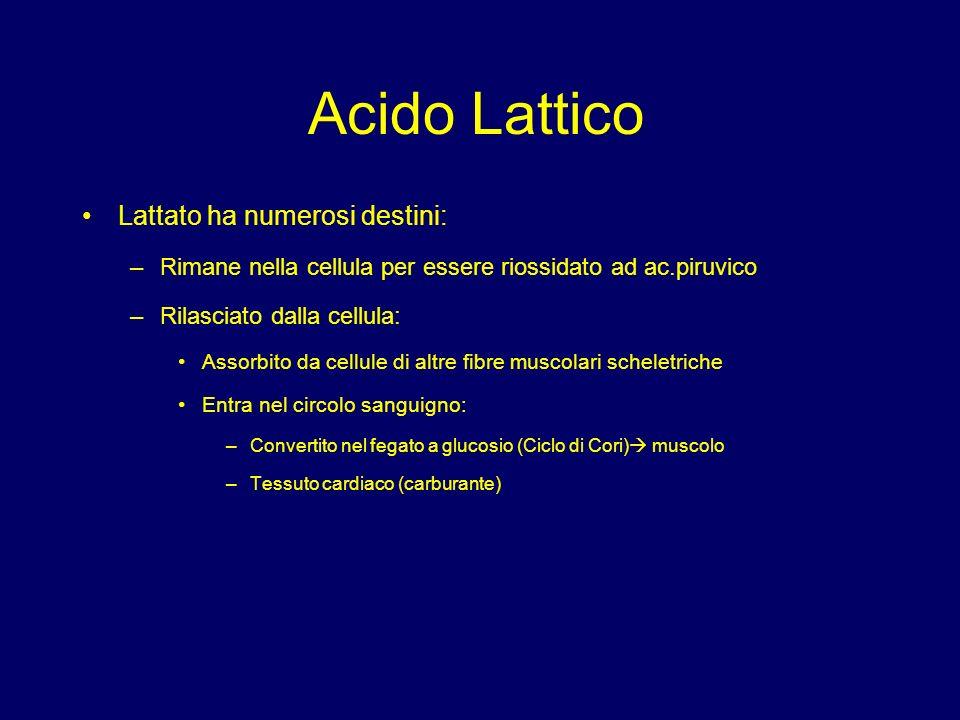 Acido Lattico Lattato ha numerosi destini: –Rimane nella cellula per essere riossidato ad ac.piruvico –Rilasciato dalla cellula: Assorbito da cellule