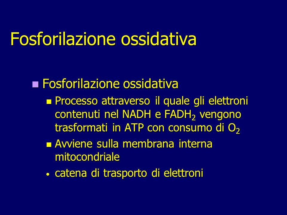 Fosforilazione ossidativa Fosforilazione ossidativa Processo attraverso il quale gli elettroni contenuti nel NADH e FADH 2 vengono trasformati in ATP con consumo di O 2 Processo attraverso il quale gli elettroni contenuti nel NADH e FADH 2 vengono trasformati in ATP con consumo di O 2 Avviene sulla membrana interna mitocondriale Avviene sulla membrana interna mitocondriale catena di trasporto di elettroni catena di trasporto di elettroni