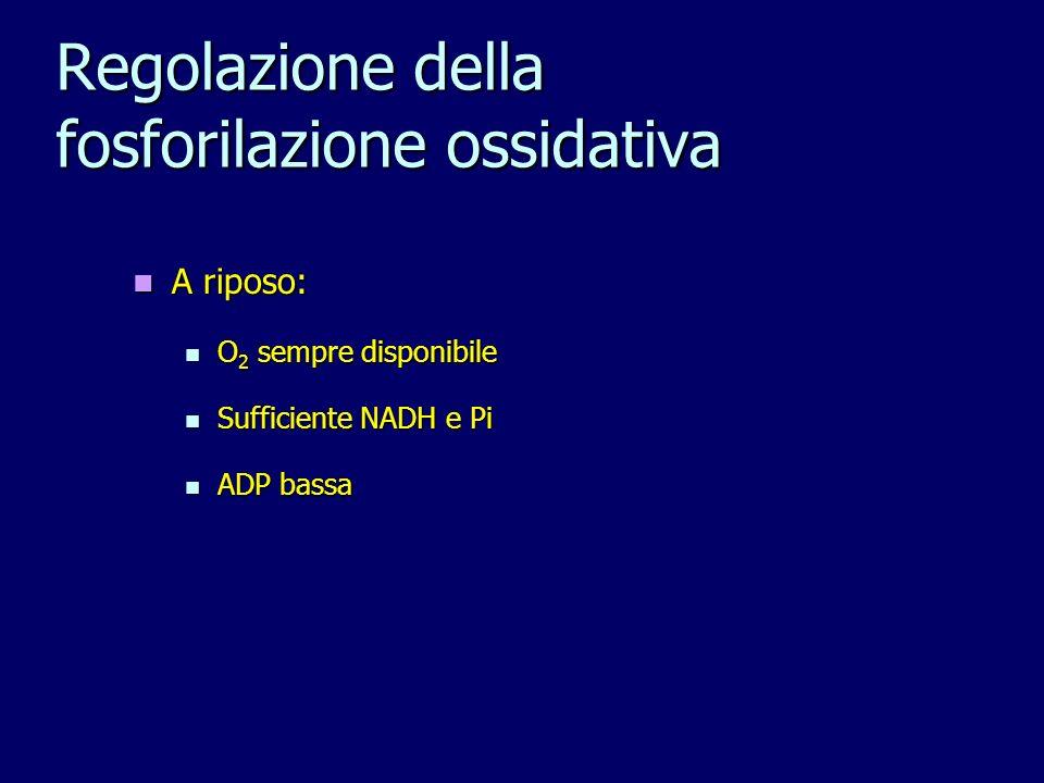 Regolazione della fosforilazione ossidativa A riposo: A riposo: O 2 sempre disponibile O 2 sempre disponibile Sufficiente NADH e Pi Sufficiente NADH e Pi ADP bassa ADP bassa