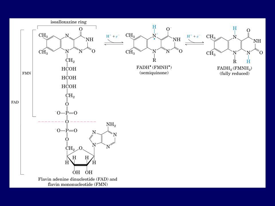 Reazioni cataboliche reazioni di ossido/riduzione –Reazioni di ossidazione (perdita di elettroni) –Attraverso lossidazione delle macromolecole, viene liberata lenergia presente allinterno delle loro strutture (e.s.
