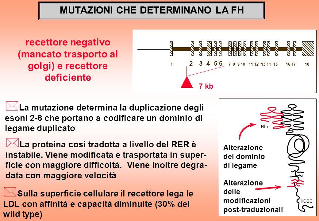 MUTAZIONI CHE DETERMINANO LA FH * La mutazione determina la duplicazione degli esoni 2-6 che portano a codificare un dominio di legame duplicato 1 2 3