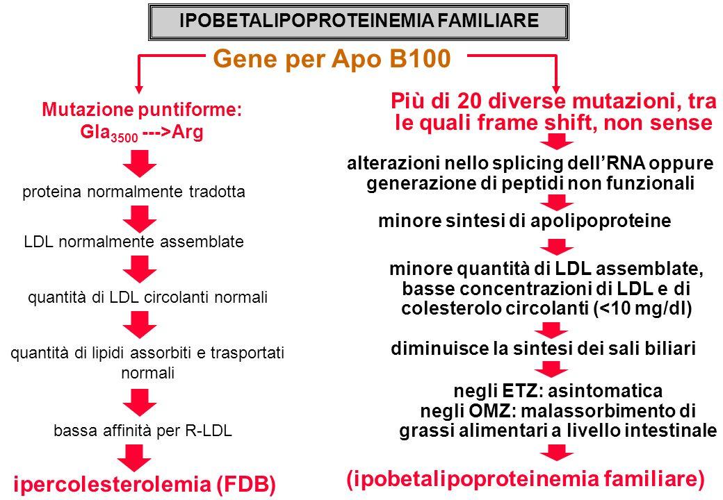 ipercolesterolemia (FDB) IPOBETALIPOPROTEINEMIA FAMILIARE Gene per Apo B100 Mutazione puntiforme: Gla 3500 --->Arg proteina normalmente tradotta Più d
