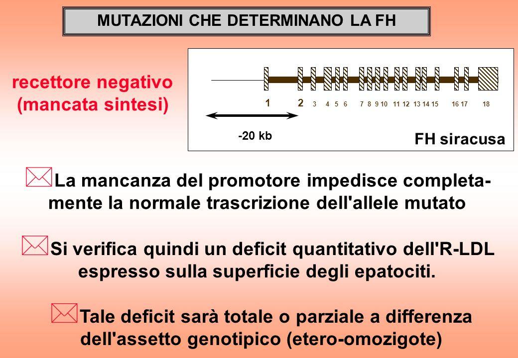 MUTAZIONI CHE DETERMINANO LA FH * La mancanza del promotore impedisce completa- mente la normale trascrizione dell'allele mutato -20 kb 1 2 3 4 5 6 7