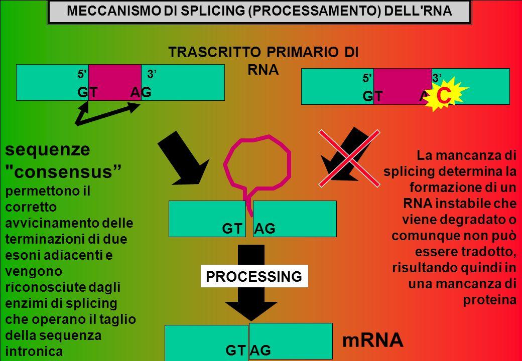 MECCANISMO DI SPLICING (PROCESSAMENTO) DELL'RNA TRASCRITTO PRIMARIO DI RNA La mancanza di splicing determina la formazione di un RNA instabile che vie