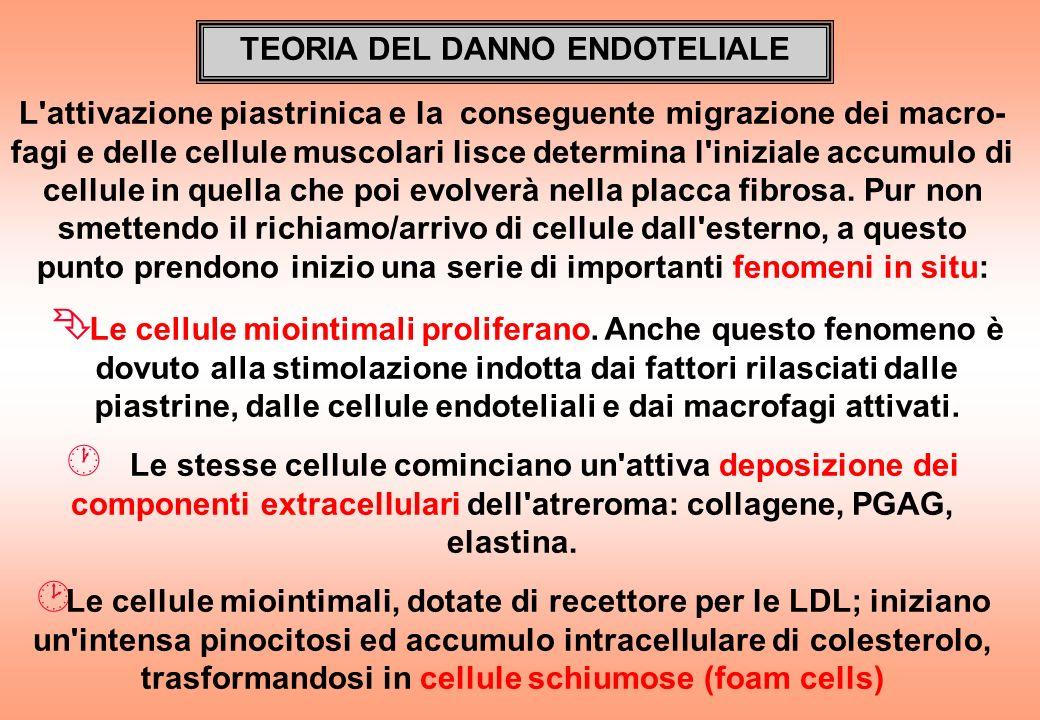 TEORIA DEL DANNO ENDOTELIALE L'attivazione piastrinica e la conseguente migrazione dei macro- fagi e delle cellule muscolari lisce determina l'inizial