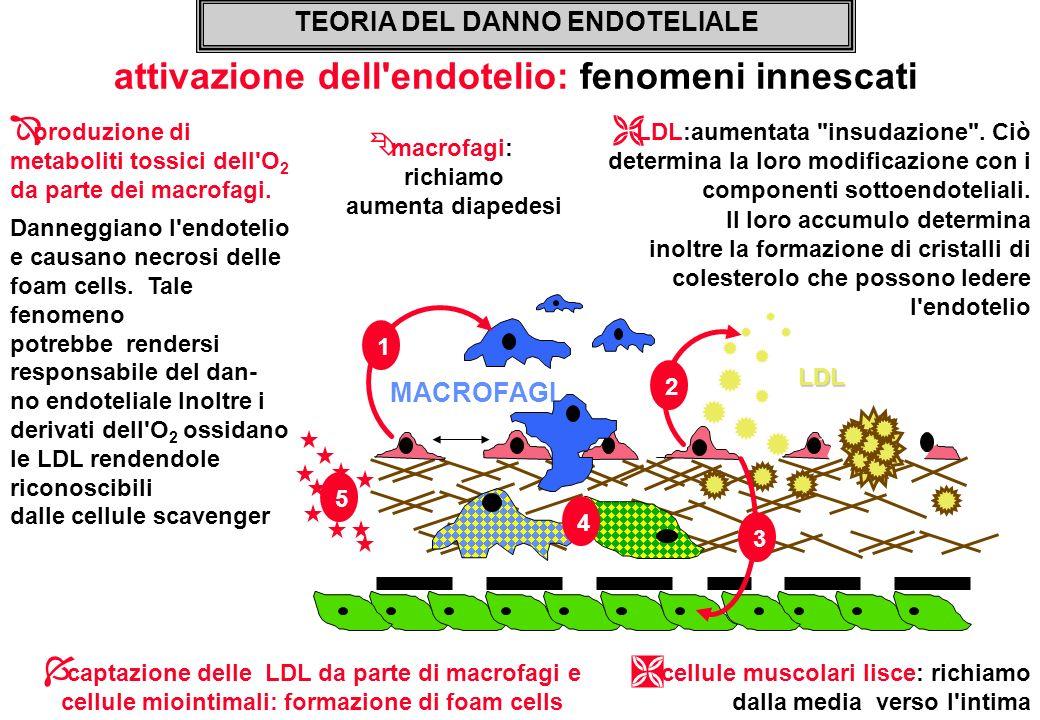Ë LDL:aumentata