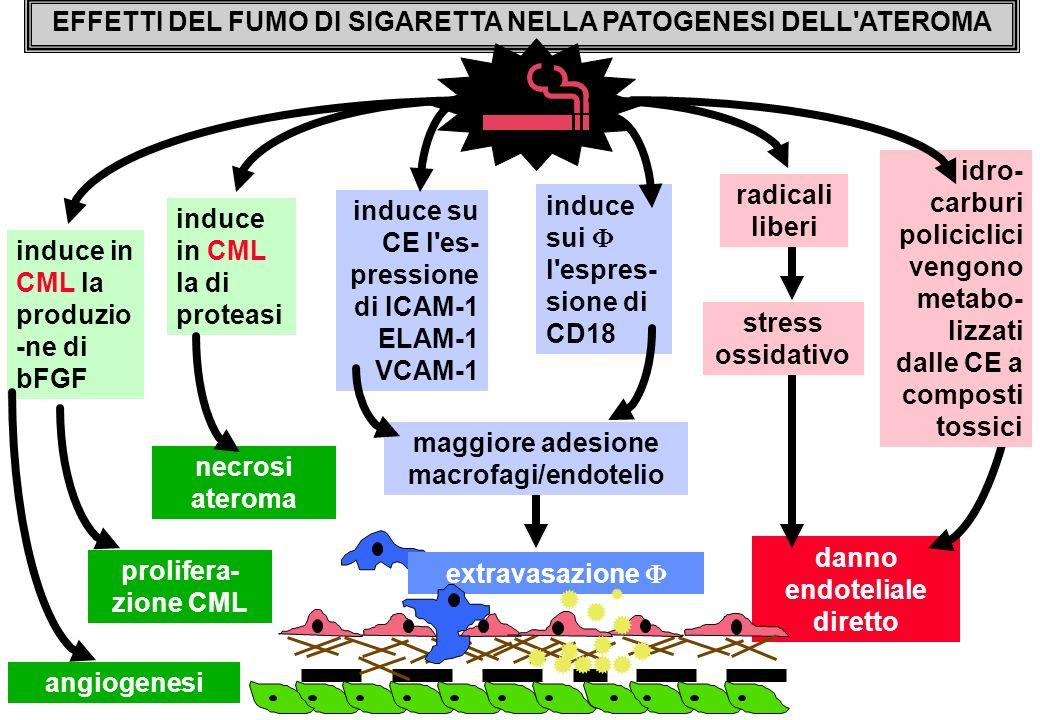danno endoteliale diretto extravasazione EFFETTI DEL FUMO DI SIGARETTA NELLA PATOGENESI DELL'ATEROMA idro- carburi policiclici vengono metabo- lizzati