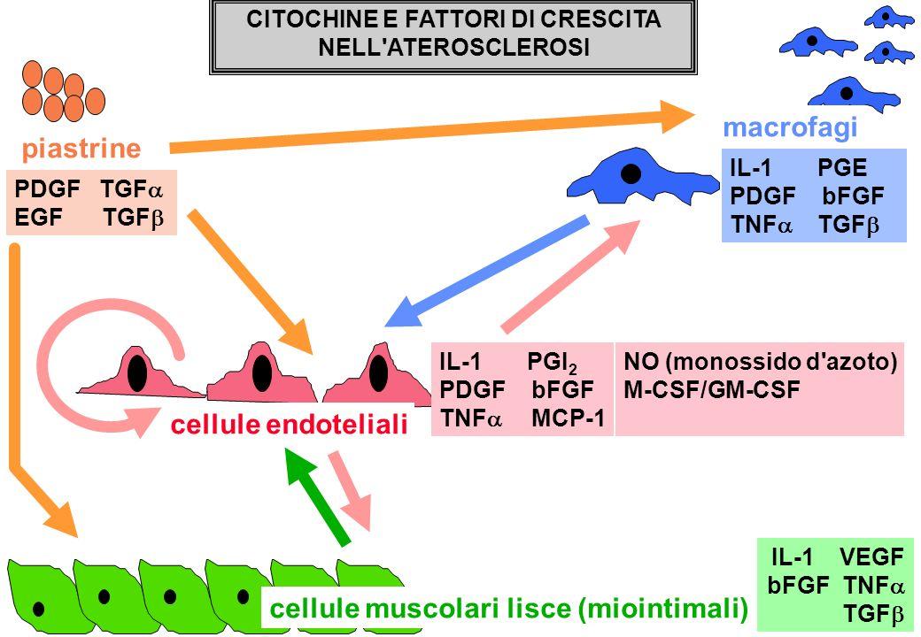 CITOCHINE E FATTORI DI CRESCITA NELL'ATEROSCLEROSI macrofagi PDGF TGF EGF TGF IL-1 PGE PDGF bFGF TNF TGF IL-1 VEGF bFGF TNF TGF piastrine IL-1 PGI 2 P