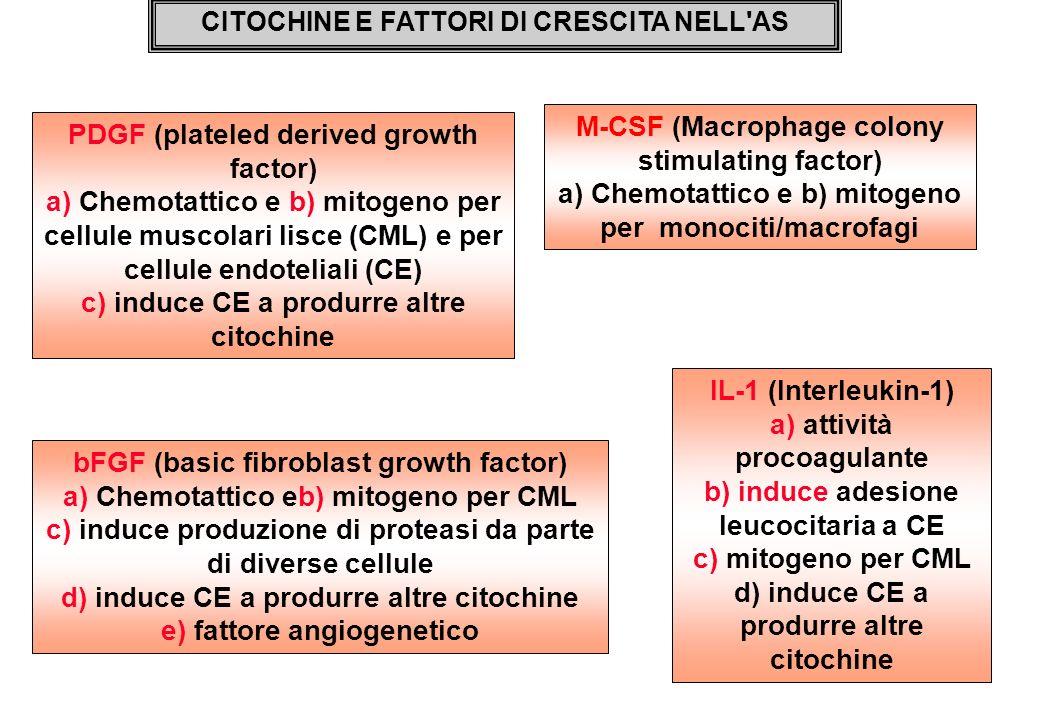 IL-1 (Interleukin-1) a) attività procoagulante b) induce adesione leucocitaria a CE c) mitogeno per CML d) induce CE a produrre altre citochine CITOCH