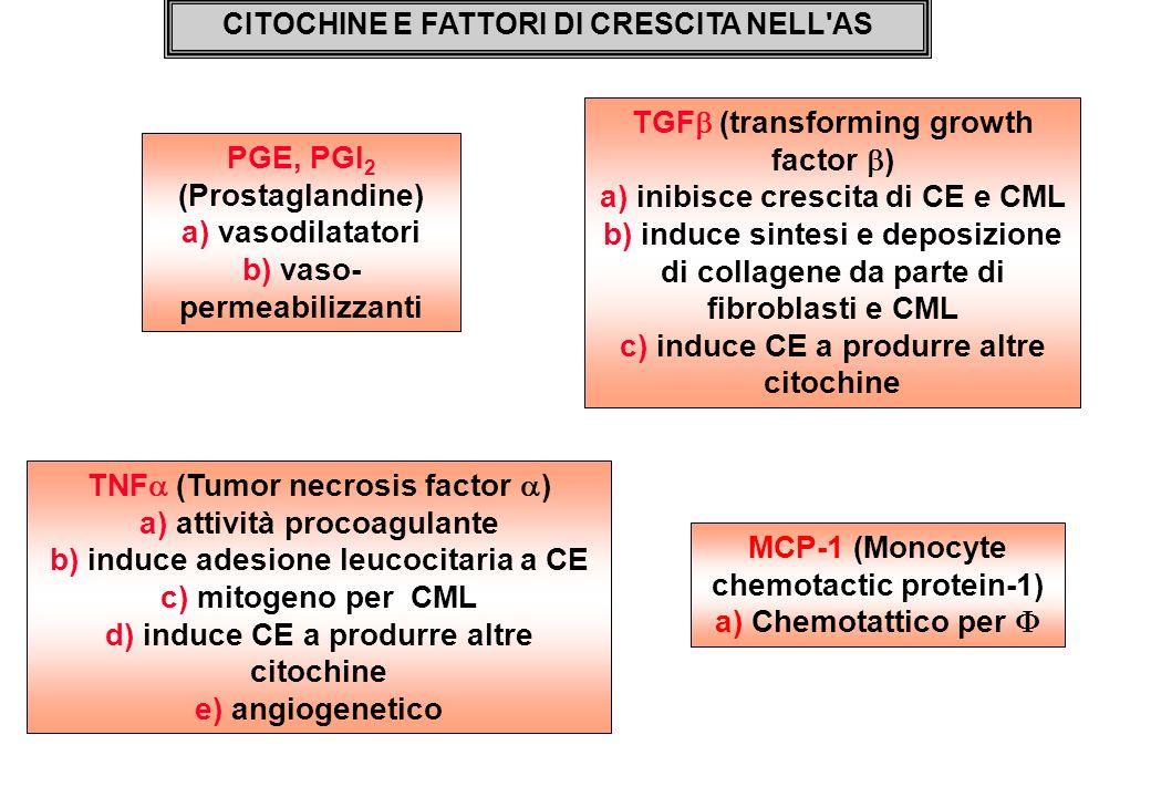 CITOCHINE E FATTORI DI CRESCITA NELL'AS MCP-1 (Monocyte chemotactic protein-1) a) Chemotattico per TNF (Tumor necrosis factor ) a) attività procoagula
